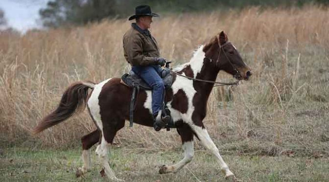 GALLANT, AL - DECEMBER 12: Republican Senatorial candidate Roy Moore rides his horse to cast his vote at the polling location setup in the Fire Department on December 12, 2017 in Gallant, Alabama. Mr. Moore is facing off against Democrat Doug Jones in the special election for the U.S. Senate. (Photo by Joe Raedle/Getty Images)