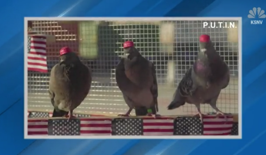 Pigeons Wearing MAGA Hats 'Protest' Democratic Debate In Las Vegas